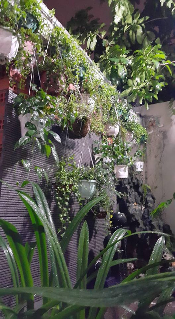 Cây xanh cũng được trồng khắp nơi tạo cảm giác thoải mái,dễ chịu. - Tin sao Viet - Tin tuc sao Viet - Scandal sao Viet - Tin tuc cua Sao - Tin cua Sao