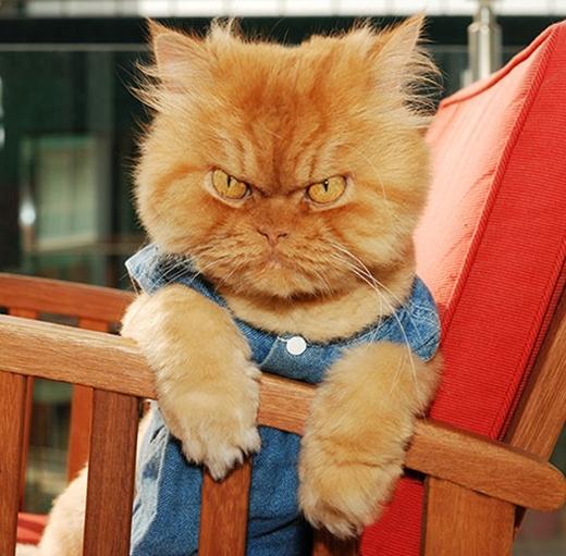 Trong Garfi lúc nào cũng cáu giận, nhưng thực chất đây là một chú mèo rất dễ thương và thân thiện.