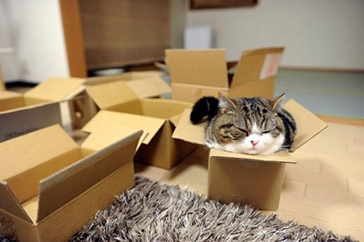 Vậy nên người hâm mộ thường gọi chú bằngtênMaster of boxes - Chúa tể các loại hộp.