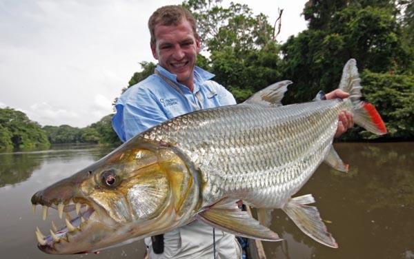 Hoảng hốt loài thủy quái ăn thịt người được nuôi như cá cảnh ở Hà Nội