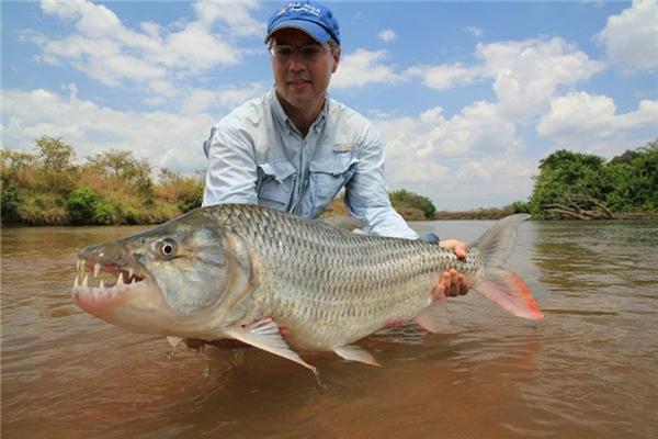 Khá nhiều cần thủ chuyên nghiệp trên thế giới đã từng bắt được con cá khổng lồ vô cùng đáng sợ này. (Ảnh: Internet)
