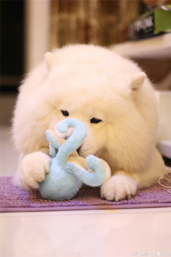 Nó thương mấy con thú bông đồ chơi của nó lắm.