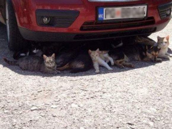 Là mèo thì cũng cần bóng mát.