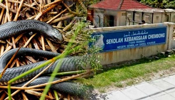 Một bé gái bị rắn cắn tại trường học đã tử vong.