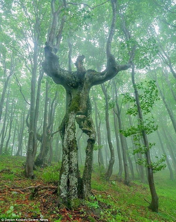 Nếu vào khu rừng này vào buổi tối, có lẽ bạn sẽ tưởng mình gặp quái vật.
