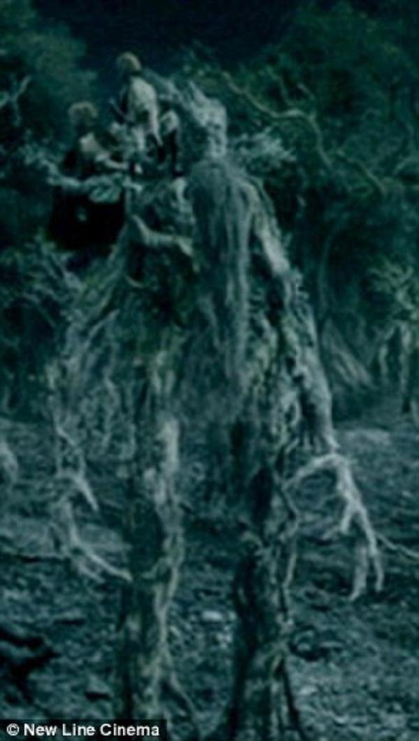 """Có người ví cái cây với cái cây biết nói Treebeard the Ent trong """"Chúa tể của những chiếc nhẫn""""."""