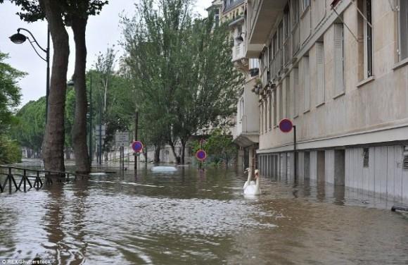 Ngoài ra, hàng loạt trường học hay các thư viện lớn tại Paris cũng bị phong toả cho đến khi nước lũ rút hoàn toàn.