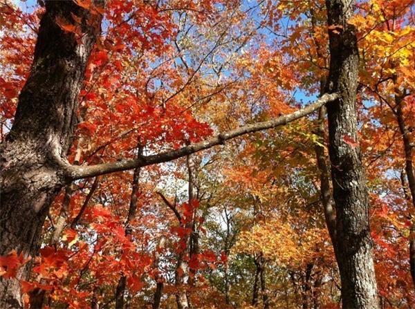 7. Đến cái cây cũng có đôi có cặp.