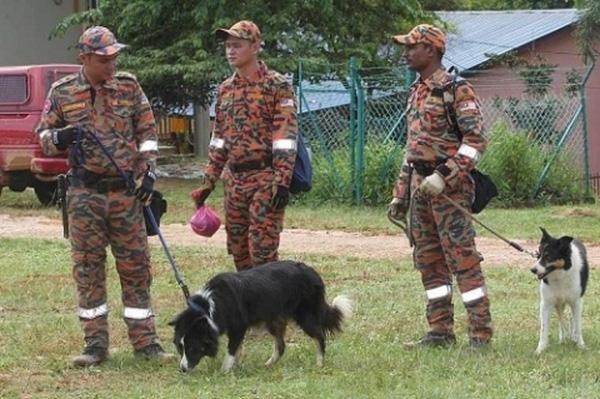 Đội cứu hộ tiến hành tìm kiếm ở rừng Tohoi, Kelantan, Malaysia.