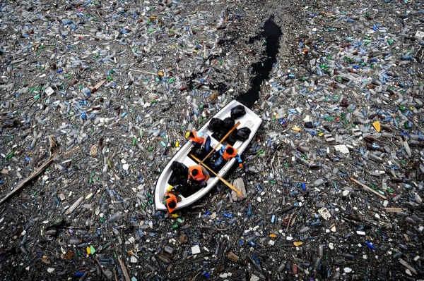 Bạn sẽ giật mình khi biết đến cách con người đã hủy hoại sinh vật biển