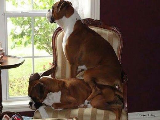 Ngồi cao hơn hẳn, thích thật!