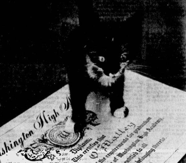 Tấm bằng cao đẳng danh giá hoá ra lại rơi vào tay 1 cô mèo.