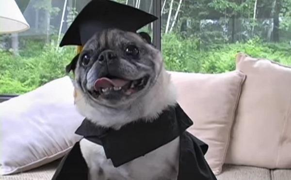 Chester còn không biết mình đi học từ bao giờ mà lại có bằng...