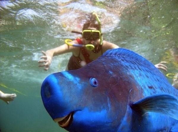 Họ cá vẹt có khoảng 80 loài và loài nào cũng mang màu sắc rực rỡ, tươi sáng.