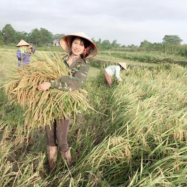 ... nhưng đến cuối tuần, cô sẵn sàng khoác lên mình bộ trang phục lao động, giúp bố mẹ cắt lúa.