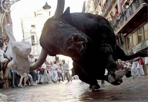 Để có bức ảnh hoàn hảo về cuộc thi đấu bò, anh thợ nhiếp ảnh đã phải trả một cái giá quá đắt! (Ảnh: Internet)