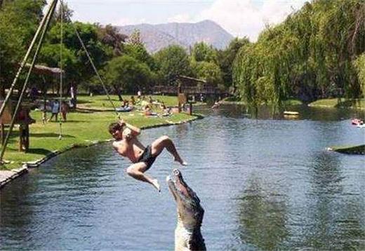Phút lỡ tay là rơi vào miệng cá sấu ngay. (Ảnh: Internet)