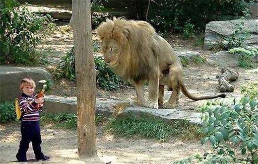 Hình ảnh gây sốc của một cậu bé vô tình bị lạc vào chuồng sư tử.(Ảnh: Internet)
