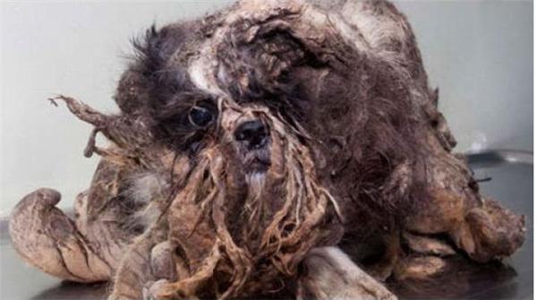 Khi được phát hiện, con chótrông xấu xí và bốc mùi hôi thối.