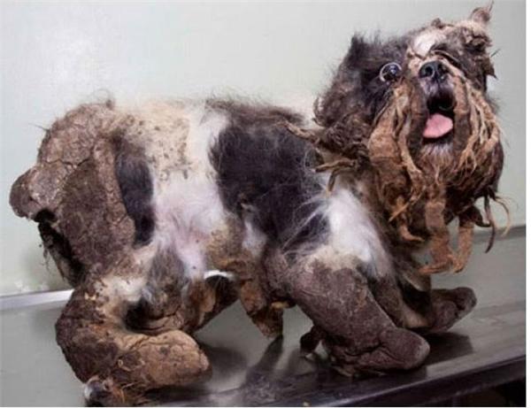 Khi trông thấy vẻ ngoài của con chó, nhân viên cửah àng thú nuôisợ hãi và có ý muốn từ chối không muốn làm vệ sinh cho nó.