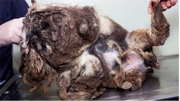 Màn lột xác của chú chó bị xem là quái vật