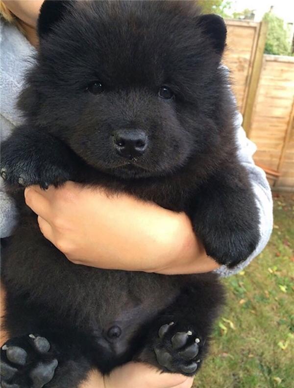 Em này là con gấu con đúng nghĩa luôn nè.