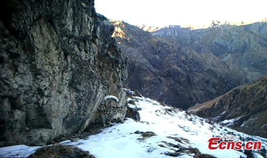 Truyền thuyết về loài báo tuyết là một trong những điều bí ẩn của khu vực núi cao Trung Á.