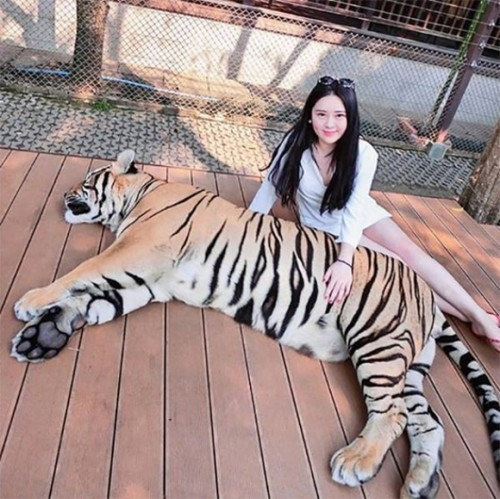 Sửng sốt cuộc sống sang chảnh của hot girl nuôi hổ trong nhà