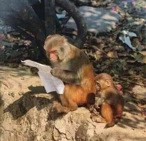 Giáo dục toàn diện, đến động vật cũng phải biết chữ. (Ảnh: Internet)