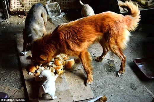 Chú chóNym được phát hiện ở Romania. (Ảnh: Internet)