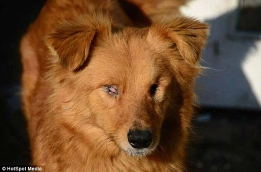 Chú chó mù này đang trở thành nguồn cảm hứng cho nhiều người. (Ảnh: Internet)