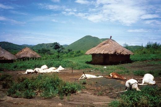 Sau khi một đám mây kỳ lạ kéo ngang qua bầu trời, toàn bộ ngườidân làng Nyos,Cameroon cùng gia súc bỗng nhiên chết hàng loạt.