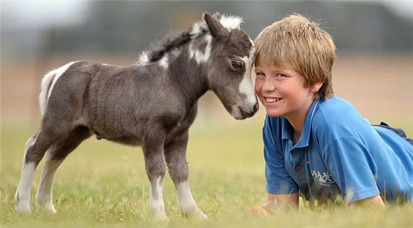 Những chú ngựa này rất thân thiện với người, đặc biệt là trẻ con.