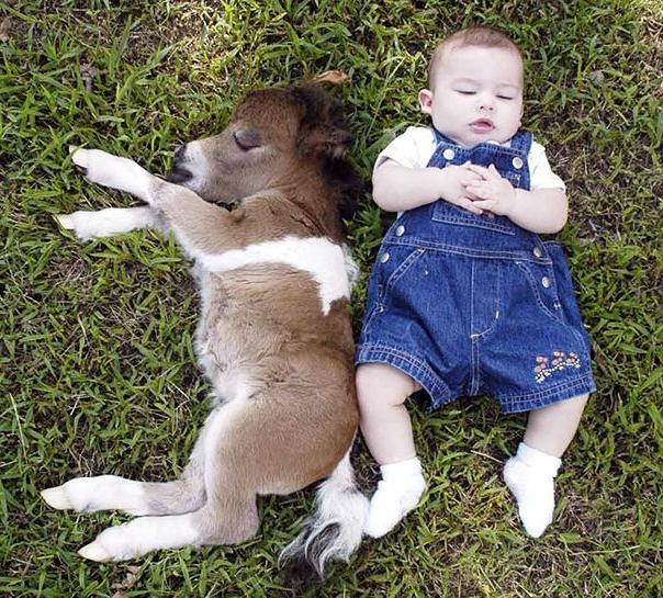 Khi còn nhỏ chúng cũng chẳng to hơn một em bé là bao đâu, có thể thoải mái ôm nhau ngủ luôn đấy.