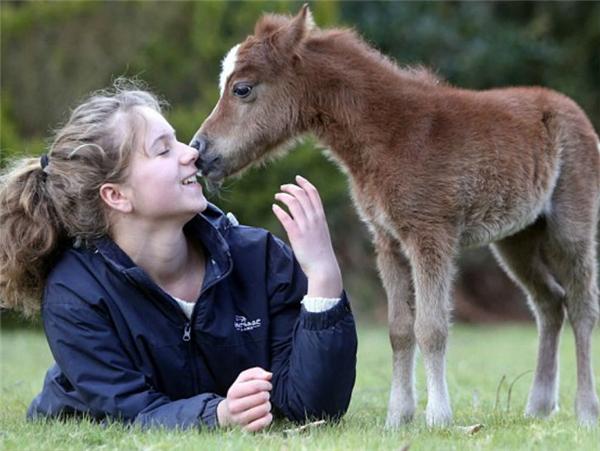 Các em ngựa lùn cũng cực kỳ tình cảm nhé, biết hôn nữa cơ.
