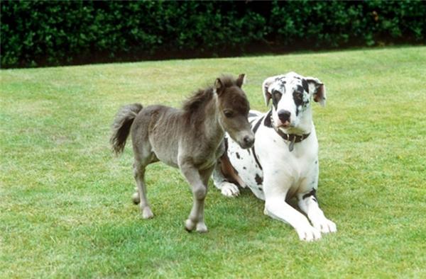 Còn được làm em của mấy chú cún cao to để được bảo vệ nữa.