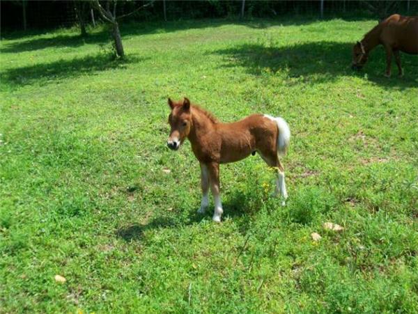 Tôi thấy em ngựa trên cỏ xanh.