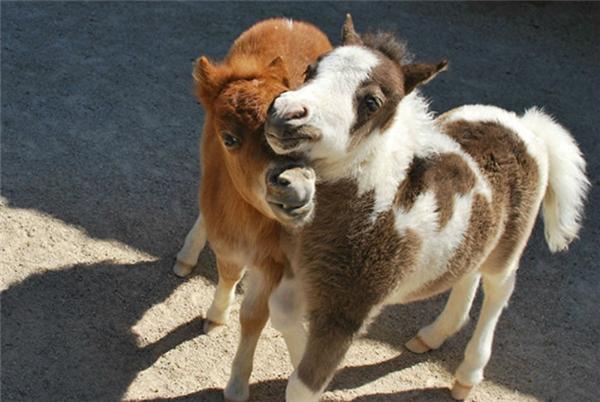 Tình thương mến thương giữa đôi bạn thân cùng tiến.