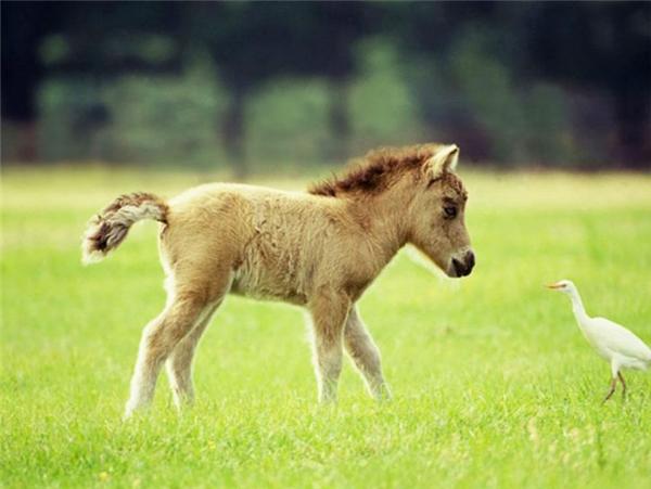 Các em ấy rất tò mò mà cũng rất thân thiện, muốn kết bạn với cả loài khác.