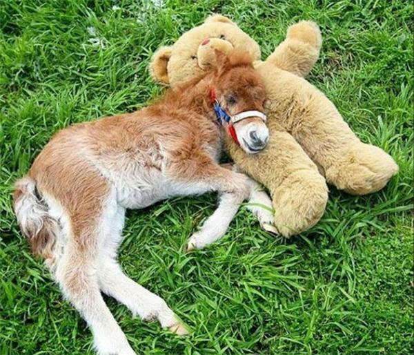 Em ngựa này có cả gấu bông riêng cho mình nhé.