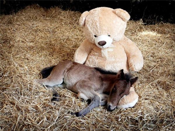 Được gối đầu lên gấu bông ngủ thế này thì còn gì hạnh phúc bằng.