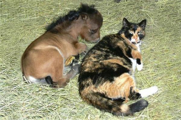 Con ngựa ngốc, cứ đi theo ta, thôi thì thương tình cho ngủ cạnh đấy.