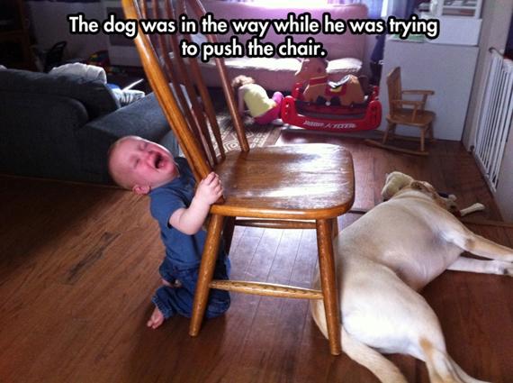 Con chó nằm chắn ngang đường nên đẩy cái ghế hổng được.