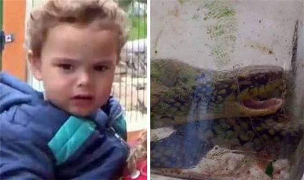 Lorenzo đã cắn chết một loài rắn cực độc. (Ảnh: Internet)