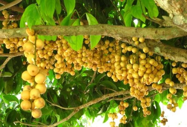 Ẩm thực Nam Bộ - 8 miệt vườn miền Nam ngon quên lối về