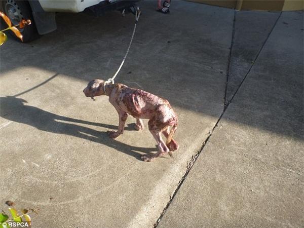 chó bị bỏ đói