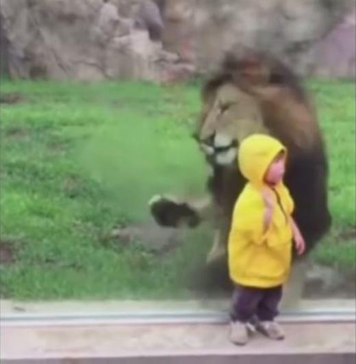 """Những hình ảnh vừa đáng sợ vừa... buồn cười về một """"tai nạn"""" suýt xảy ra trong sở thú"""