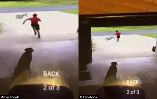 Cậu bé thường đạp xe ngang qua gara nhà Mallet, nhảy xuống xe, chạy vào chơi với chú chó Duchess rồi chạy ngay ra xe để về nhà.