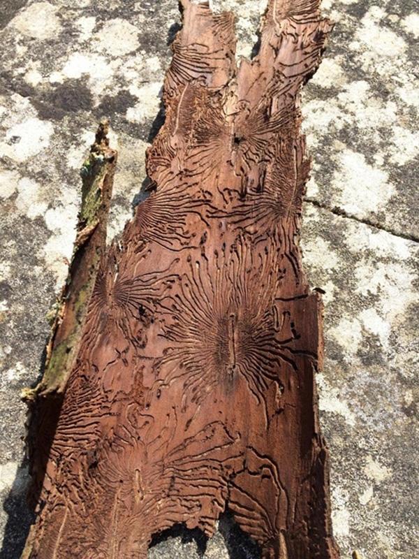 3. Những dấu vết của tổ mối trên thân cây khiến người ta liên tưởng tới những đường vân kỳ bí cổ đại.