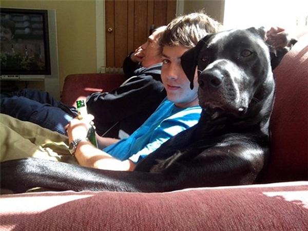 """9. """"Nhìn cái gì đấy, chưa thấy chó ngồi xem phim thế này bao giờ sao?"""""""